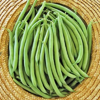 Bush Bean Eden Seeds