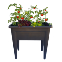 Raised garden bed planter - with Coco media and nutrient